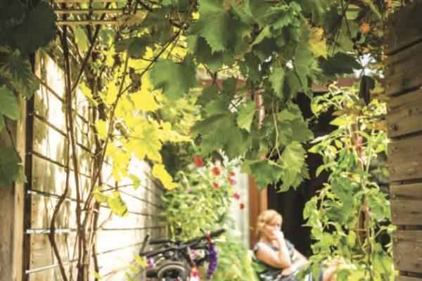 Vines on Casgrain Avenue